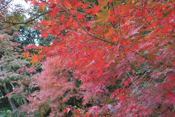 神戸で紅葉の穴場なら、絶対「須磨離宮公園」がオススメ!
