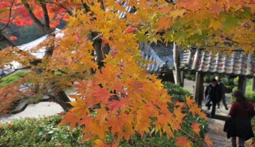 京都で人混みを避けて紅葉満喫できる穴場「西山 善峰寺」に行ってきた